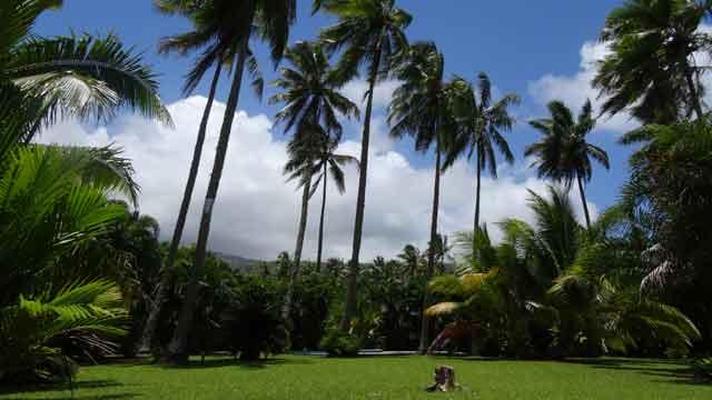 Hypnose éricksonnienne à Taravao